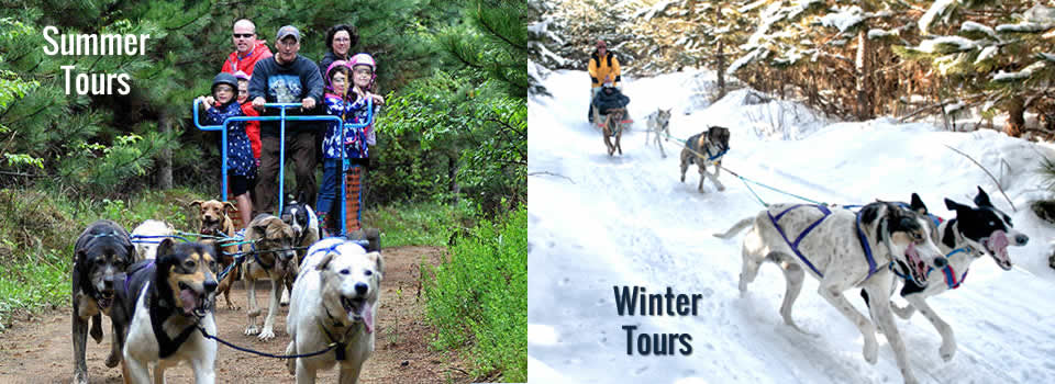 winter Dog Sledding | Summer Dog Carting for families